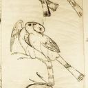 asparrowsfall