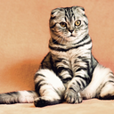 alternativestodeclawing-blog