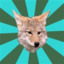 avoidantcoyote