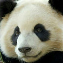 pandaparbat