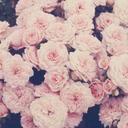 rose-patel