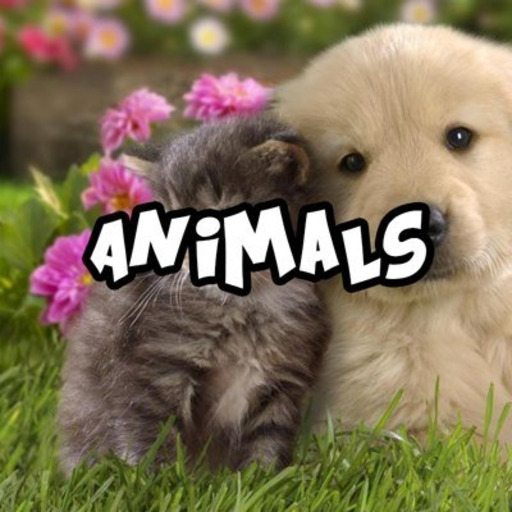 babyanimalgifs:  Cats don't always make the best dogs
