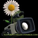 naturetvnight