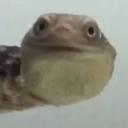 turtleboy5
