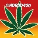 hdbud420-blog