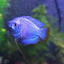 aquatic-pisce