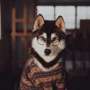 studyscout