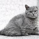 glitchcats