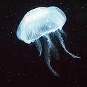 classyjellyfishpoetry