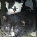 couchfullofcats