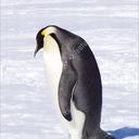 wackythewisepenguin
