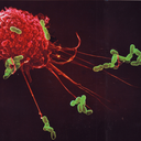its-just-a-phage