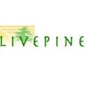 livepine0