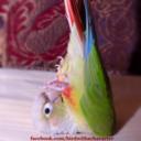 birdwithacharacter