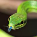 snakeoftheday