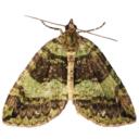 lepidopteric