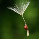 fleur-unique