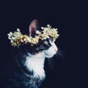 fleur-aesthetic