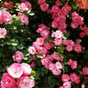 flower-lover8