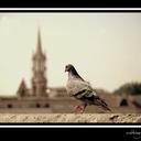 caenstreetphotography