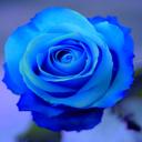 miss-bluerose