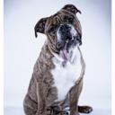 bigbadbulldogmarketing-blog