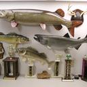 willcfish