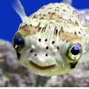 marinebiologyforever
