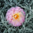flowerishness