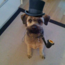 Dogs in Top Hats