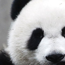 pandaword