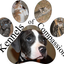 Kennels-of-compassion