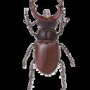 beetlegarden