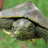 triangularturtle
