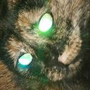 stinkbutt-the-cat