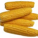 alloftheveganfood