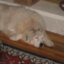 sdog1blog