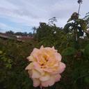 plantcatdad