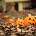 when-autumn-falls
