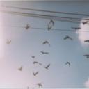 paperoddbird-blog