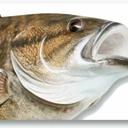 thefishcult