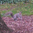 umwsquirrel