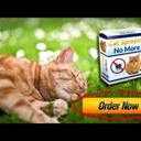 Feline Behavior - Cat Spraying