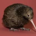 kiwi-the-detective