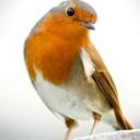 itisbird