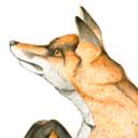viccoyote