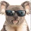 koala-urbano-blog