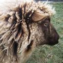 sheepyhollows
