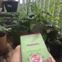 gardenforsparrows