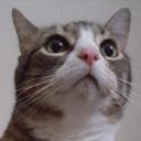 catboxmonster